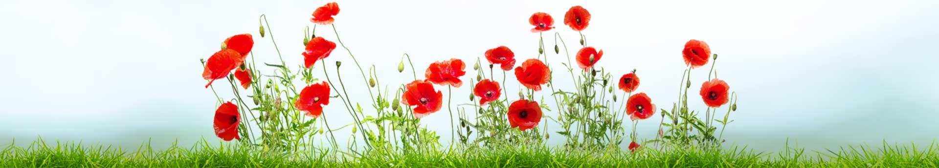 bg-11-garden-flowers
