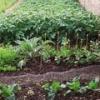 Τρόπος και εποχή σποράς λαχανικών