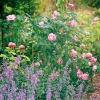 Επιλογή κατάλληλων φυτών για ανθόκηπο