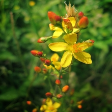 Τα βότανα σαν φυσικό συμπληρωματικό μέσο διατήρησης της υγείας
