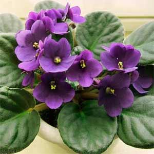 Πληροφορίες για καλλωπιστικά φυτά
